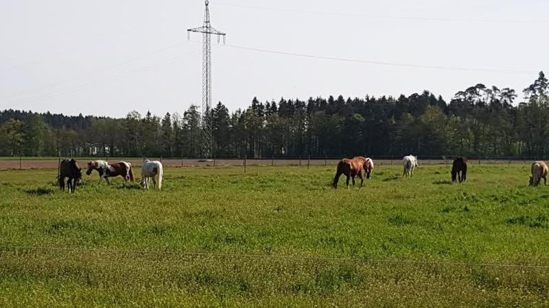 Ausflug-pferd-international-LRFV