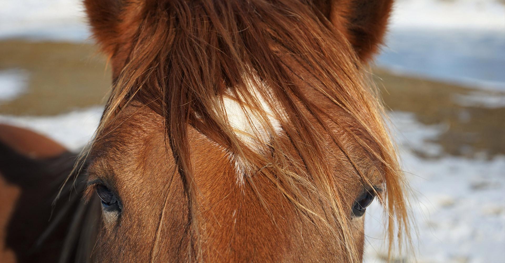 Headerbilder-pferd